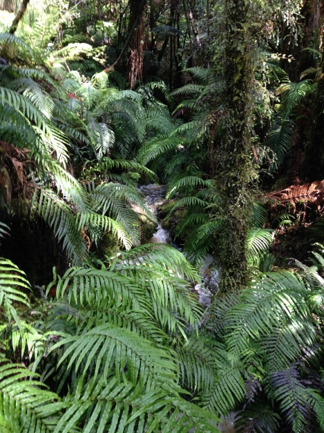The dense foliage in the rain forest - with a small waterfall.