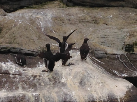 The Auks at the Newport Aquarium